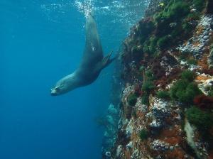 DivingSeal